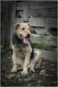 subpage-onthe-farm_On-farm-dog-controly